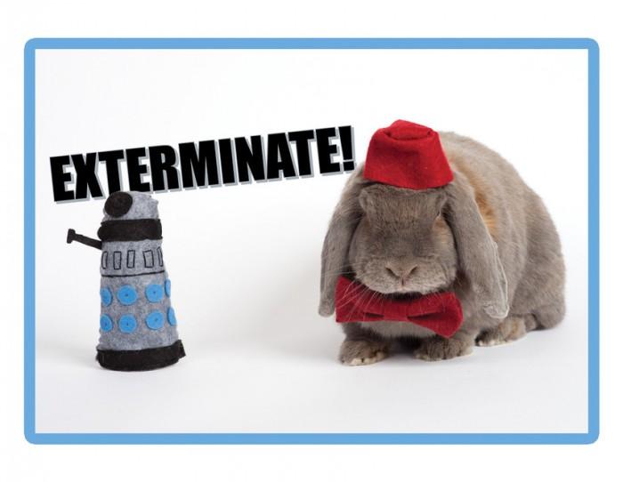 doctor-who-bunny