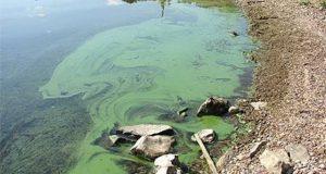 Зелень в Волге может привести к проблемам со здоровьем
